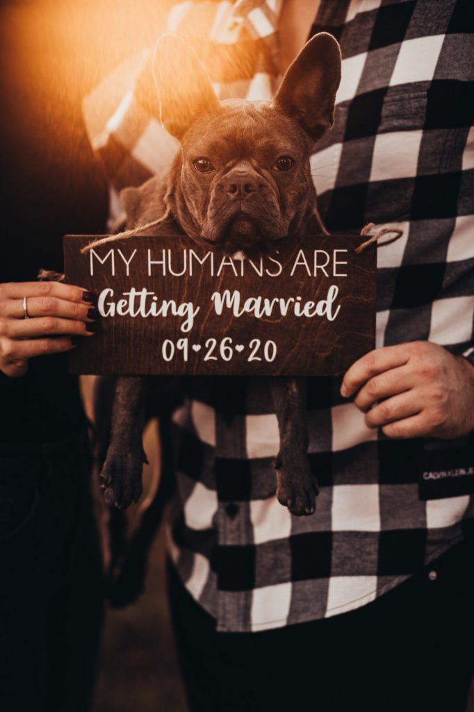 engagement session Farm engagement session engagement ring Fall photography save the date my humans are getting married